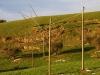 Landslide  ENEL and Telecom Italia poles